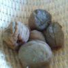 Dried Salty Plum~梅干しと梅漬け~